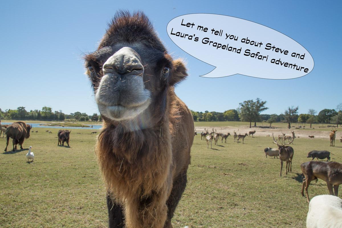 A Camel's Tale