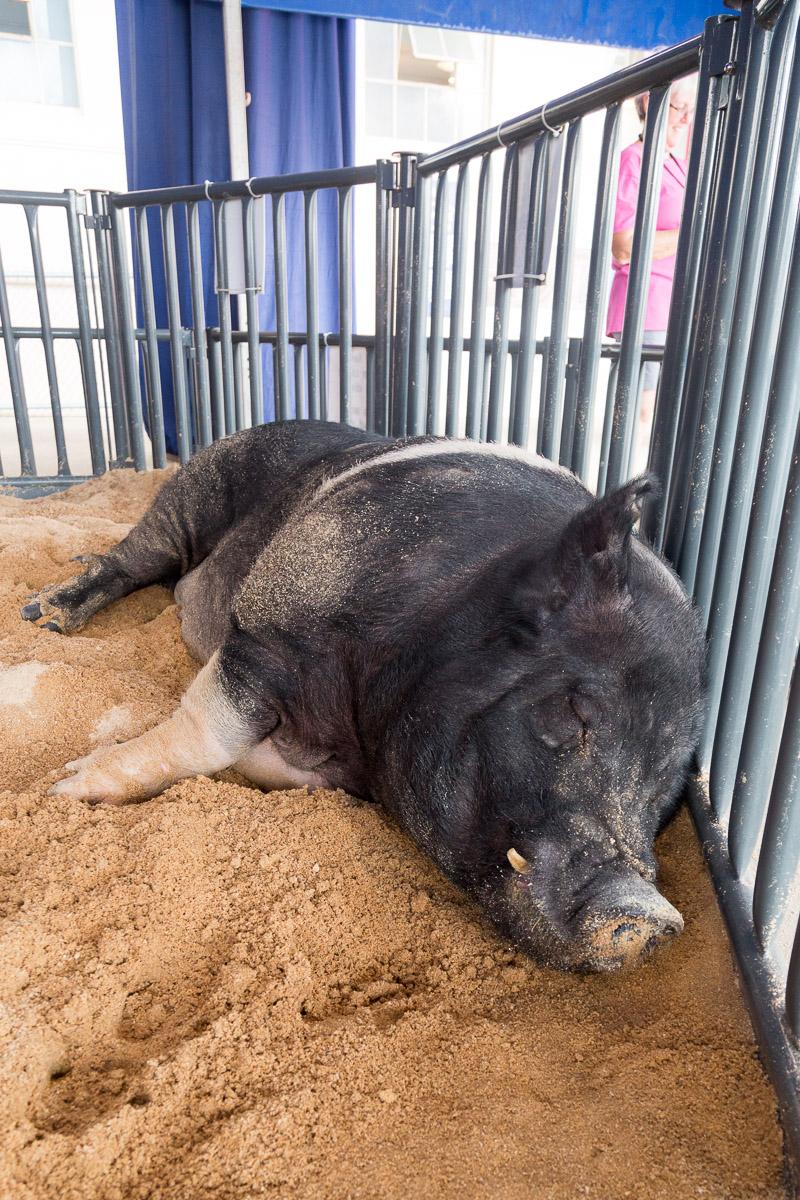 Texas State Fair-2889