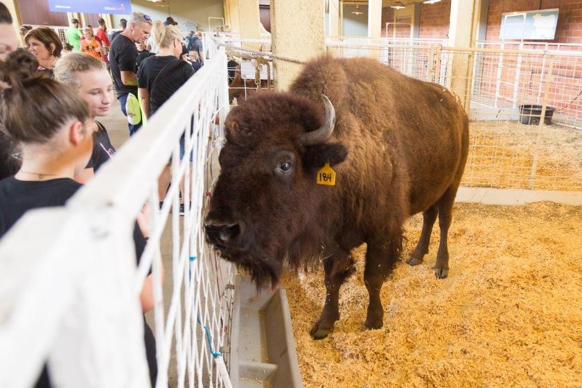 Texas State Fair-2949