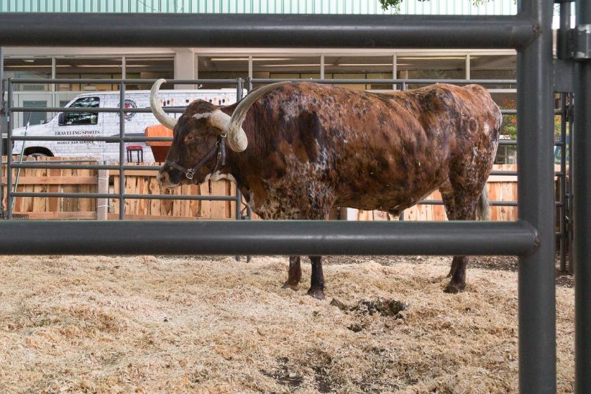 Texas State Fair-3379