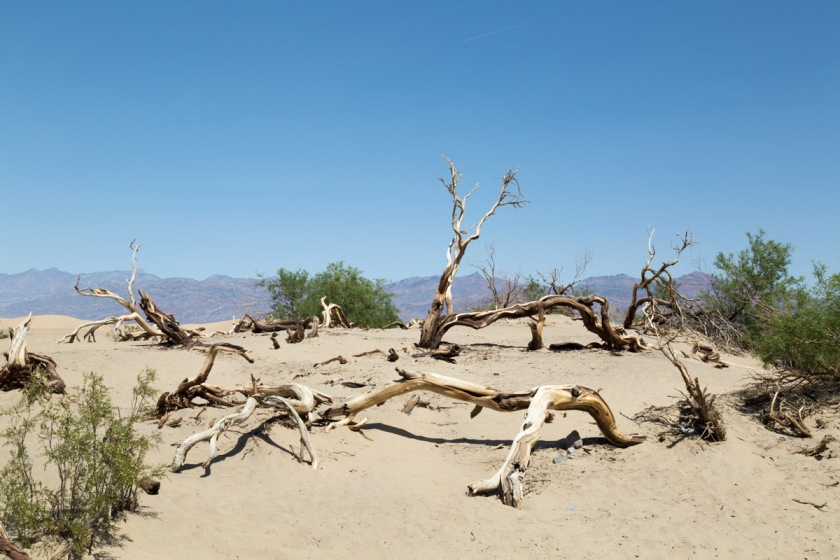 Death Valley-6266