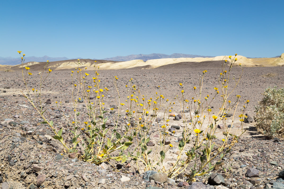 Death Valley-6360