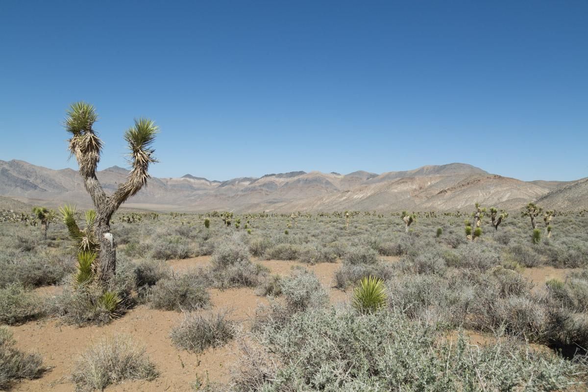 Death Valley-6560