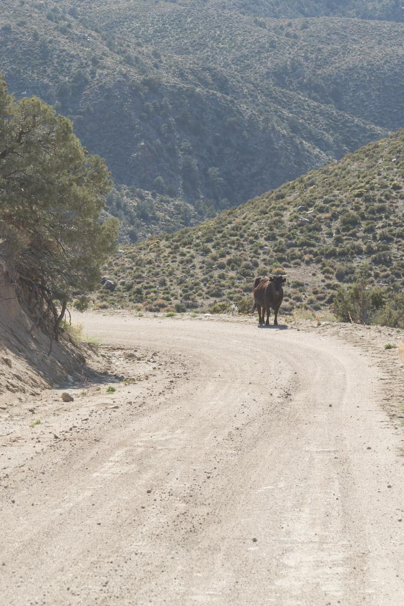Death Valley-6577
