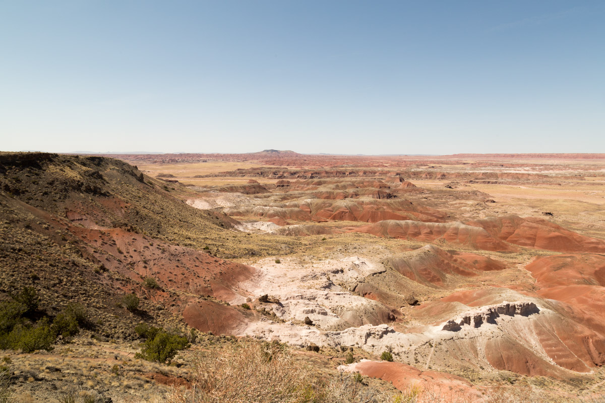 Petrified Forest NP-6130