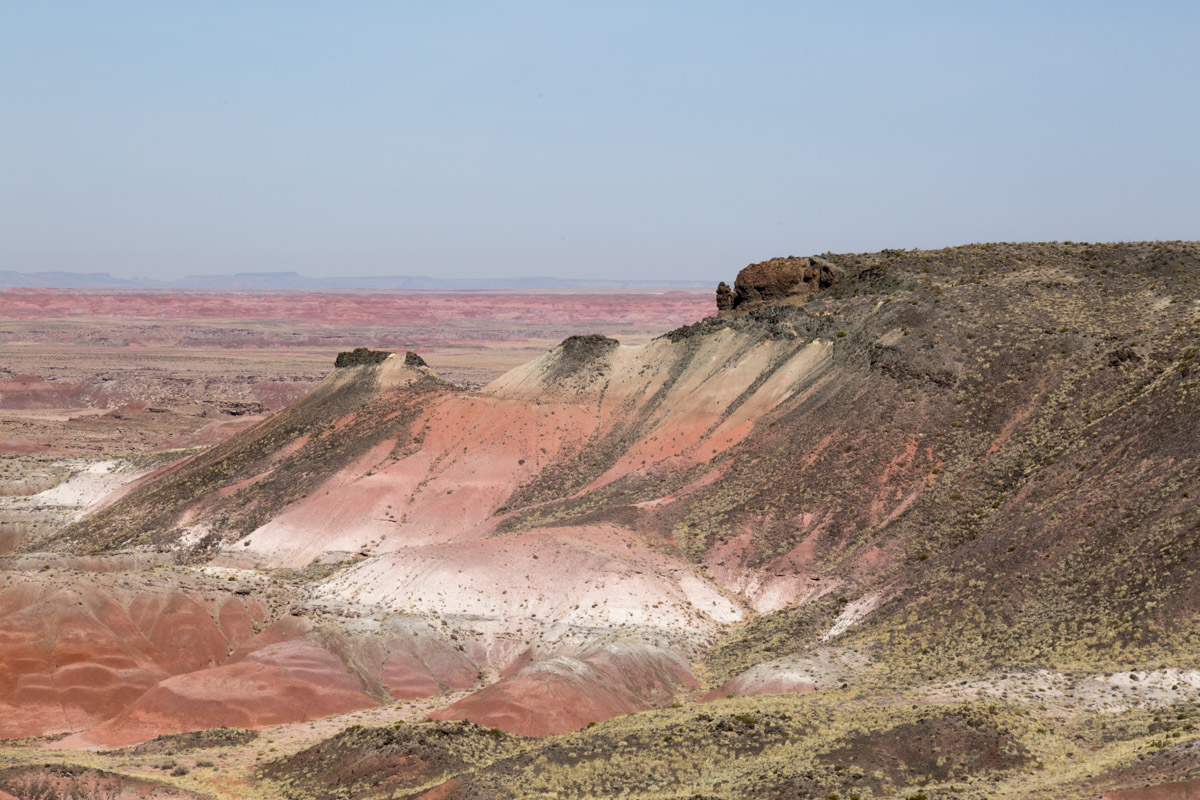 Petrified Forest NP-6197