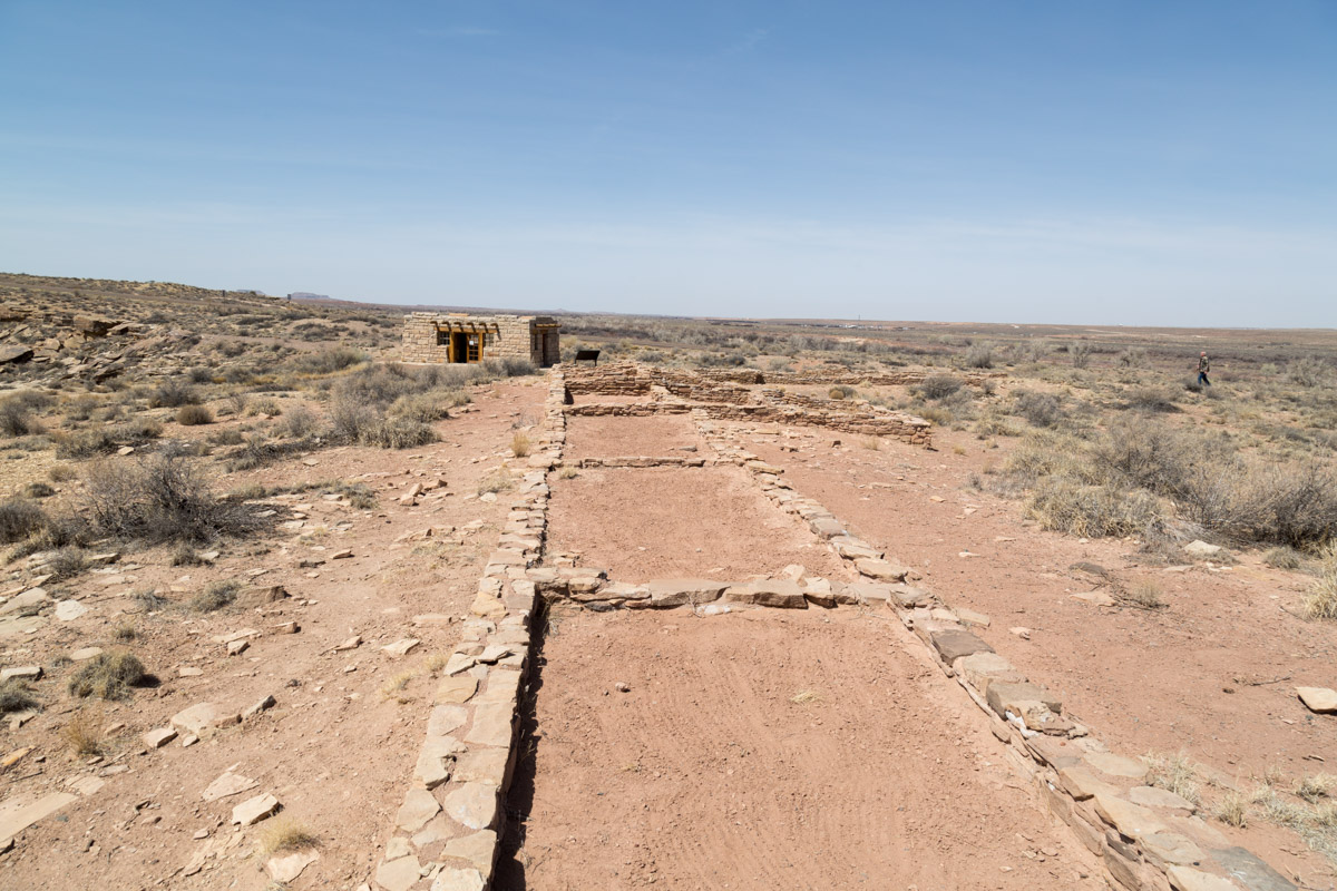 Petrified Forest NP-6208