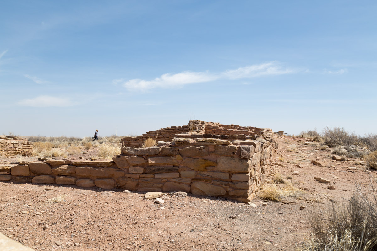 Petrified Forest NP-6221