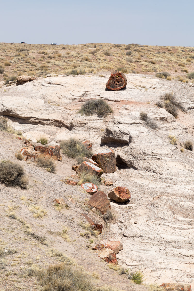 Petrified Forest NP-6227