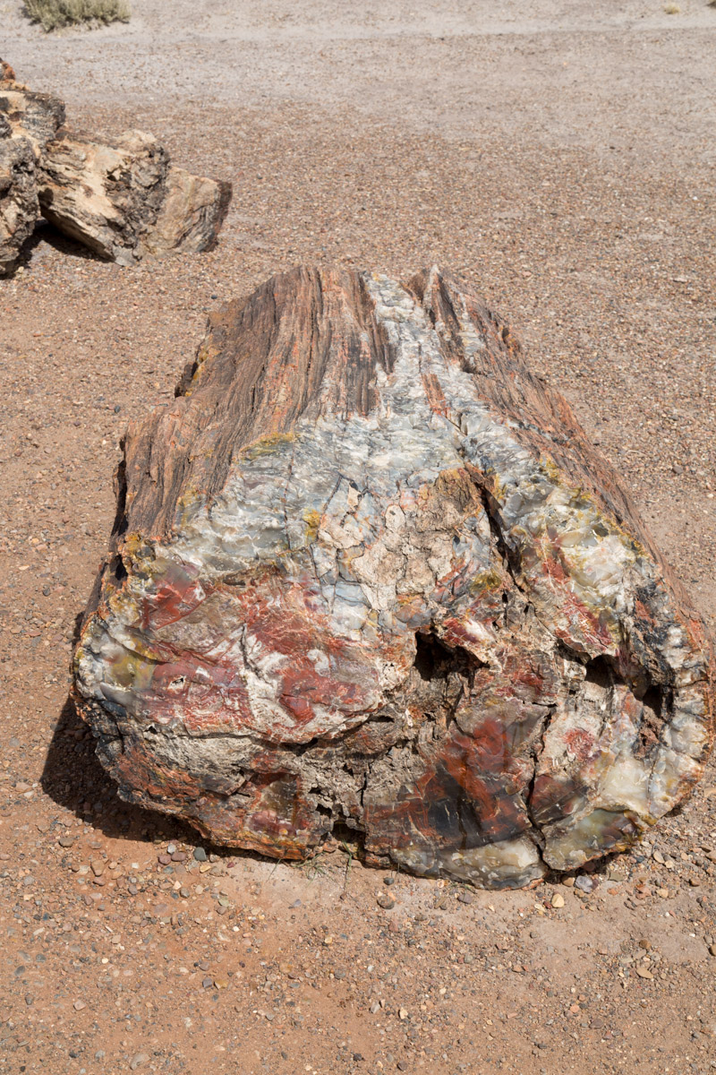 Petrified Forest NP-6234