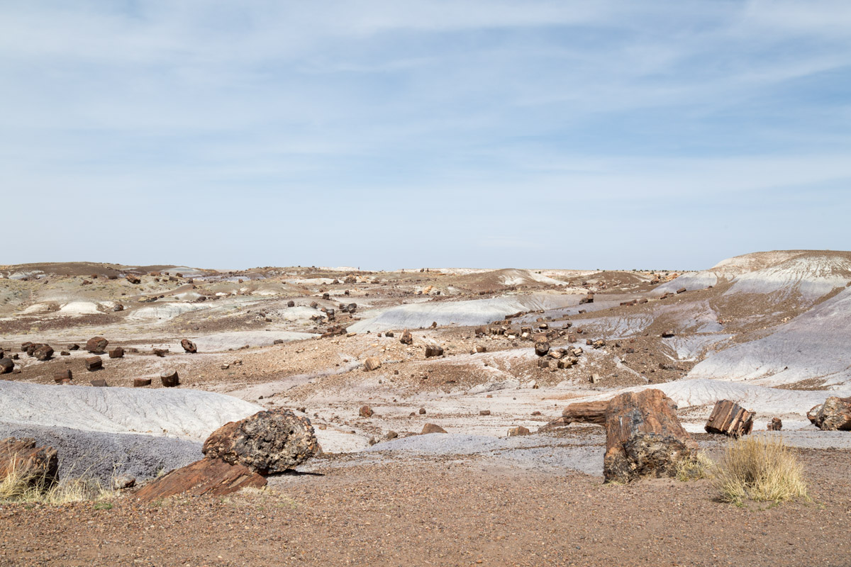 Petrified Forest NP-6235