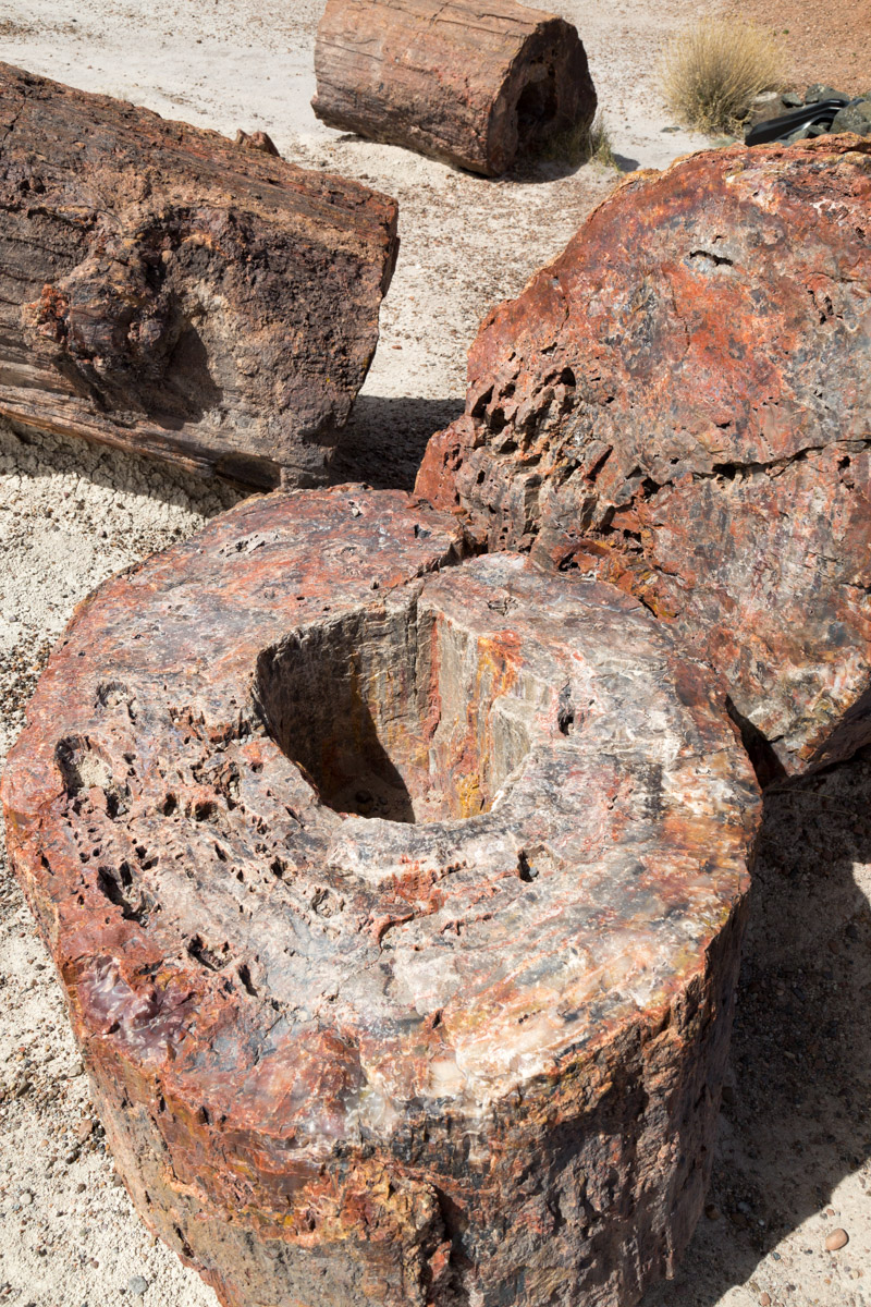 Petrified Forest NP-6240