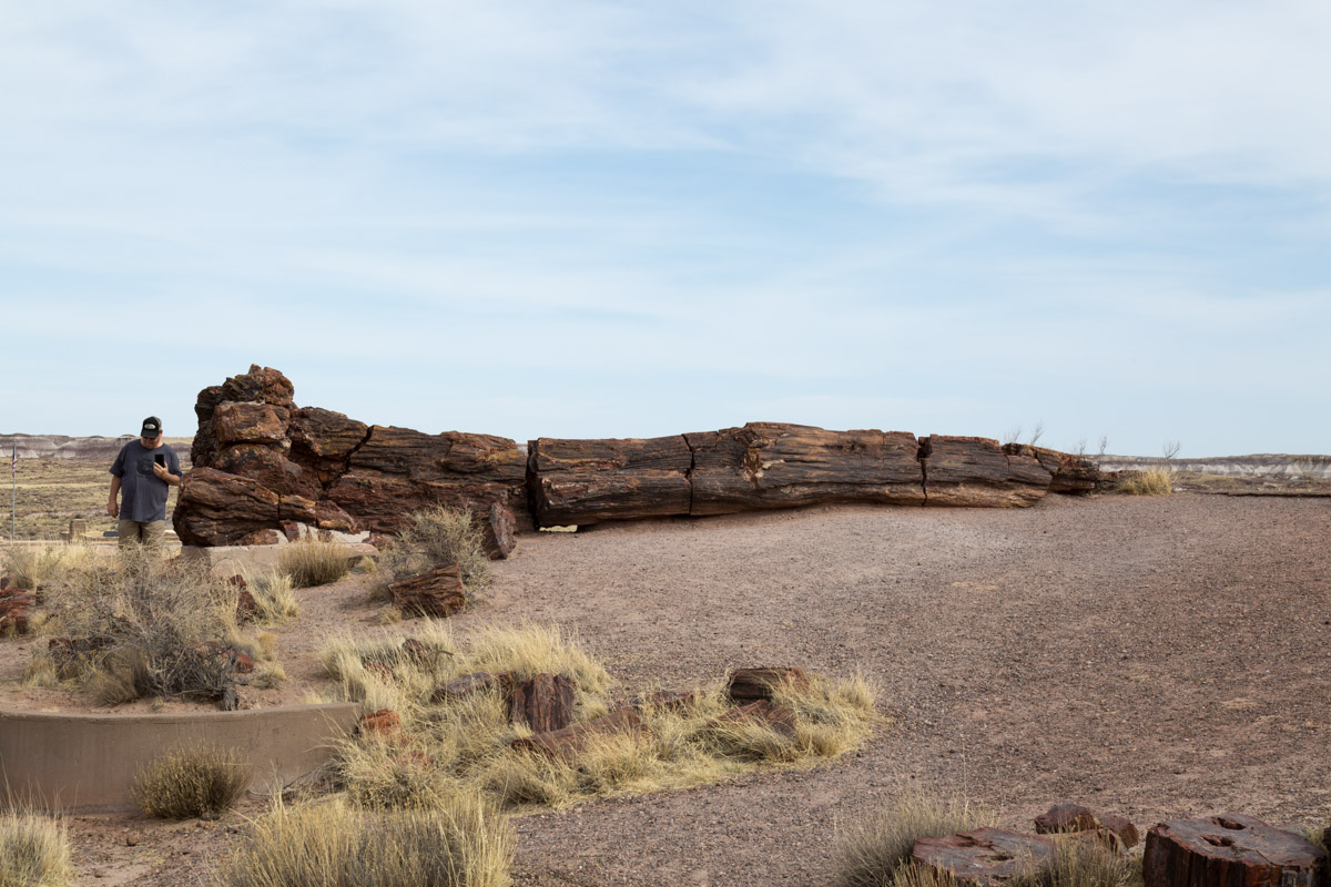 Petrified Forest NP-6251