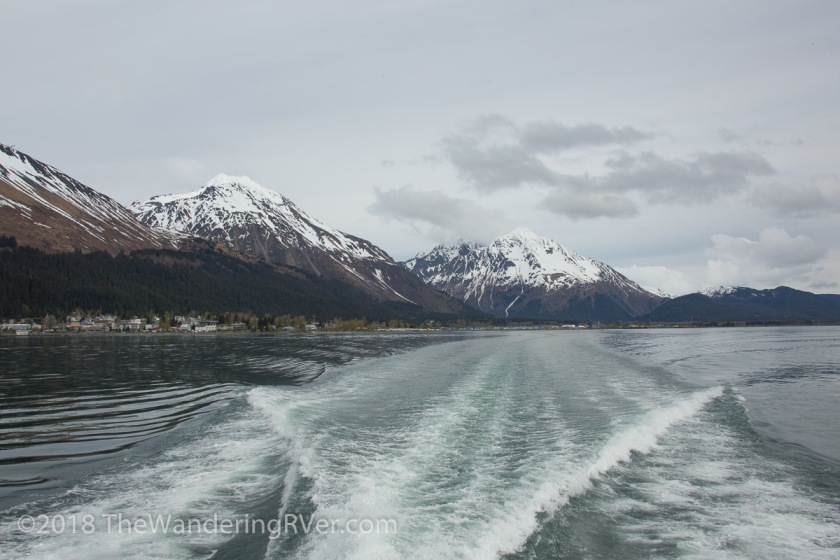 Kenai Fjords Glacier Cruise-7431