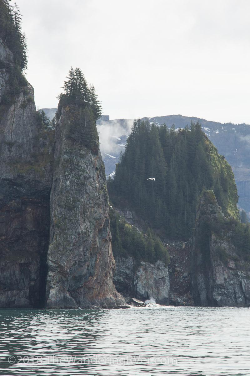 Kenai Fjords Glacier Cruise-7494