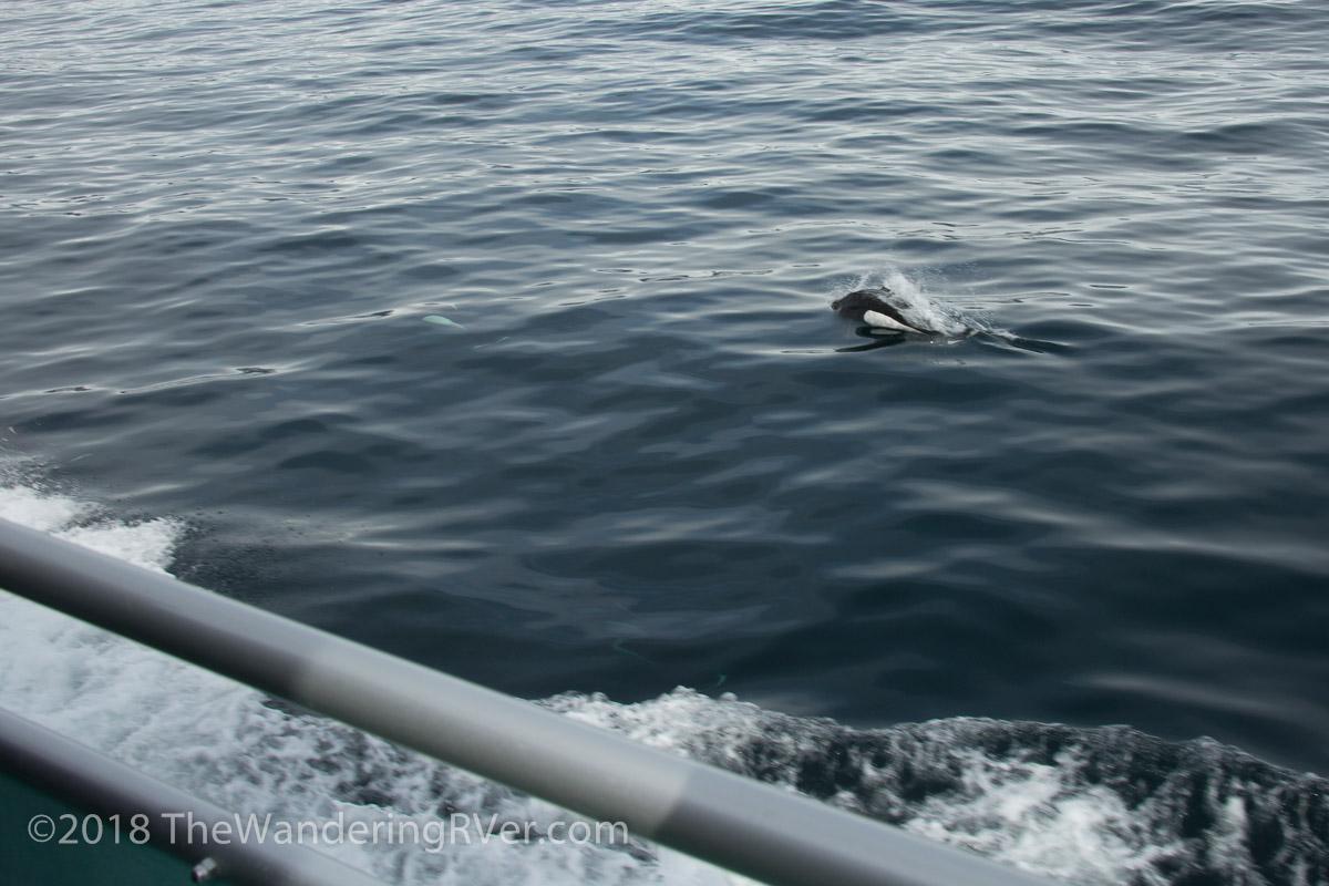 Kenai Fjords Glacier Cruise-7535