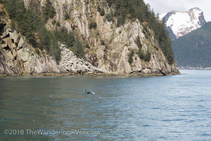 Kenai Fjords Glacier Cruise-7589
