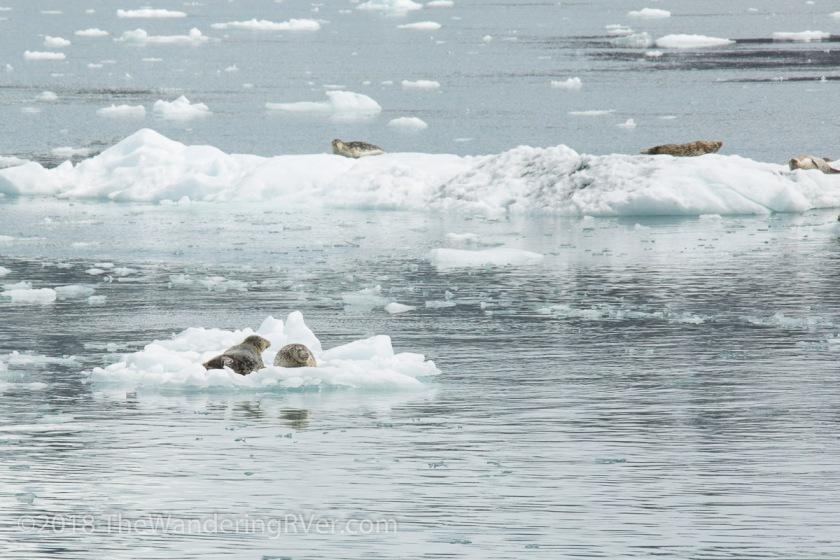 Kenai Fjords Glacier Cruise-7690