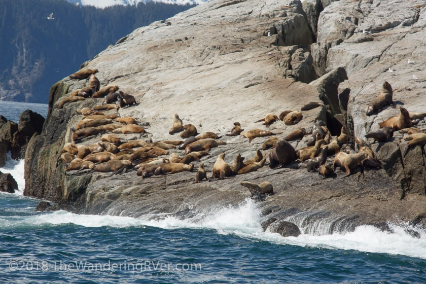 Kenai Fjords Glacier Cruise-7834