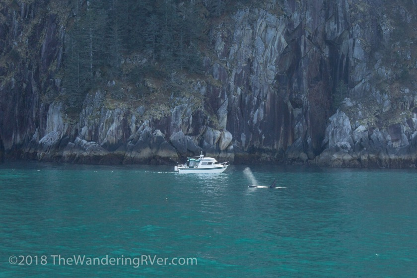 Kenai Fjords Glacier Cruise-7885