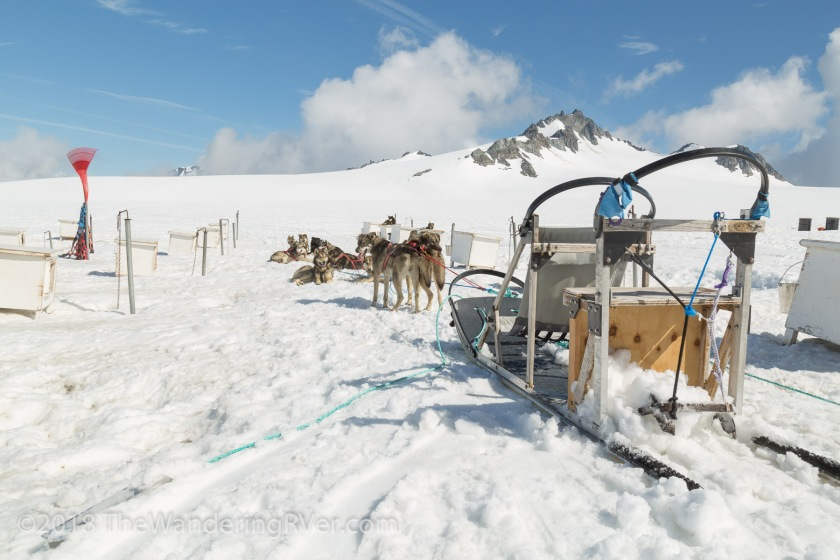 Seward Helo Dog Sled-8656