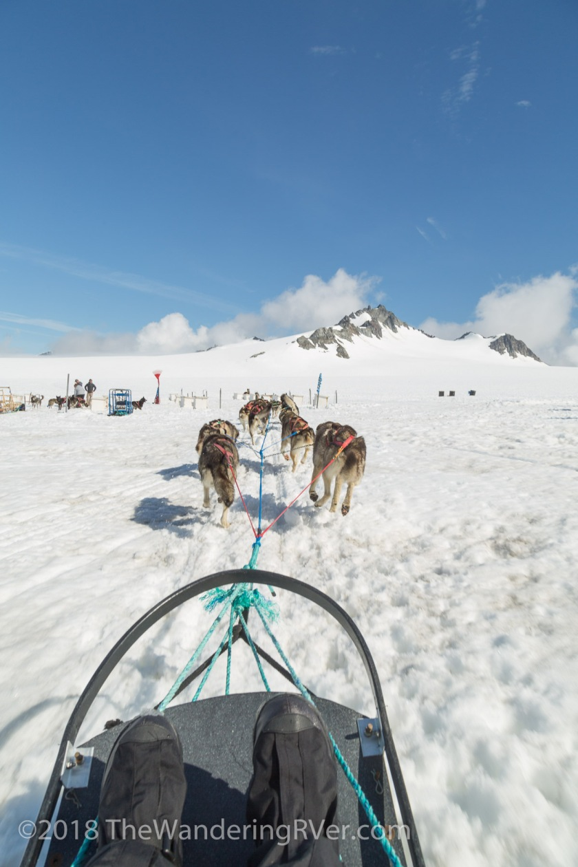 Seward Helo Dog Sled-8677