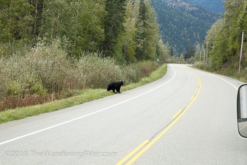 Bear-9972