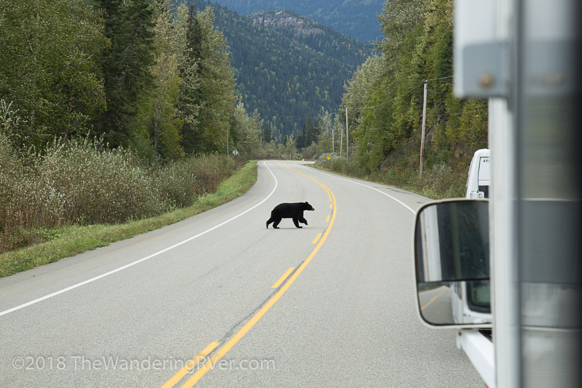 Bear-9974