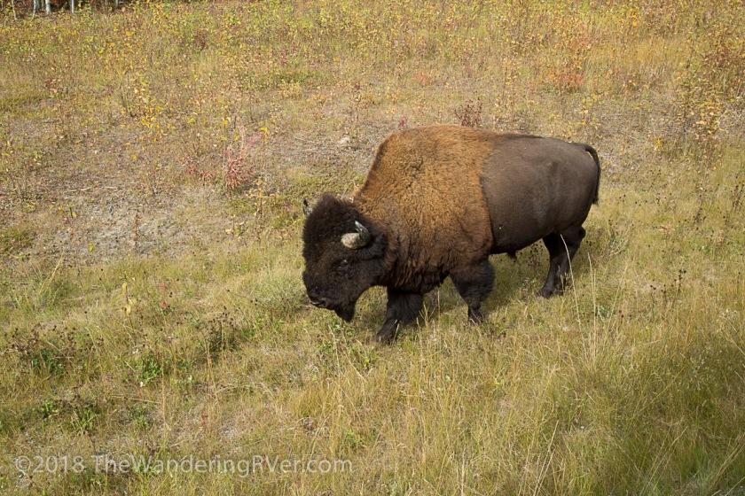 Wildlife-9873
