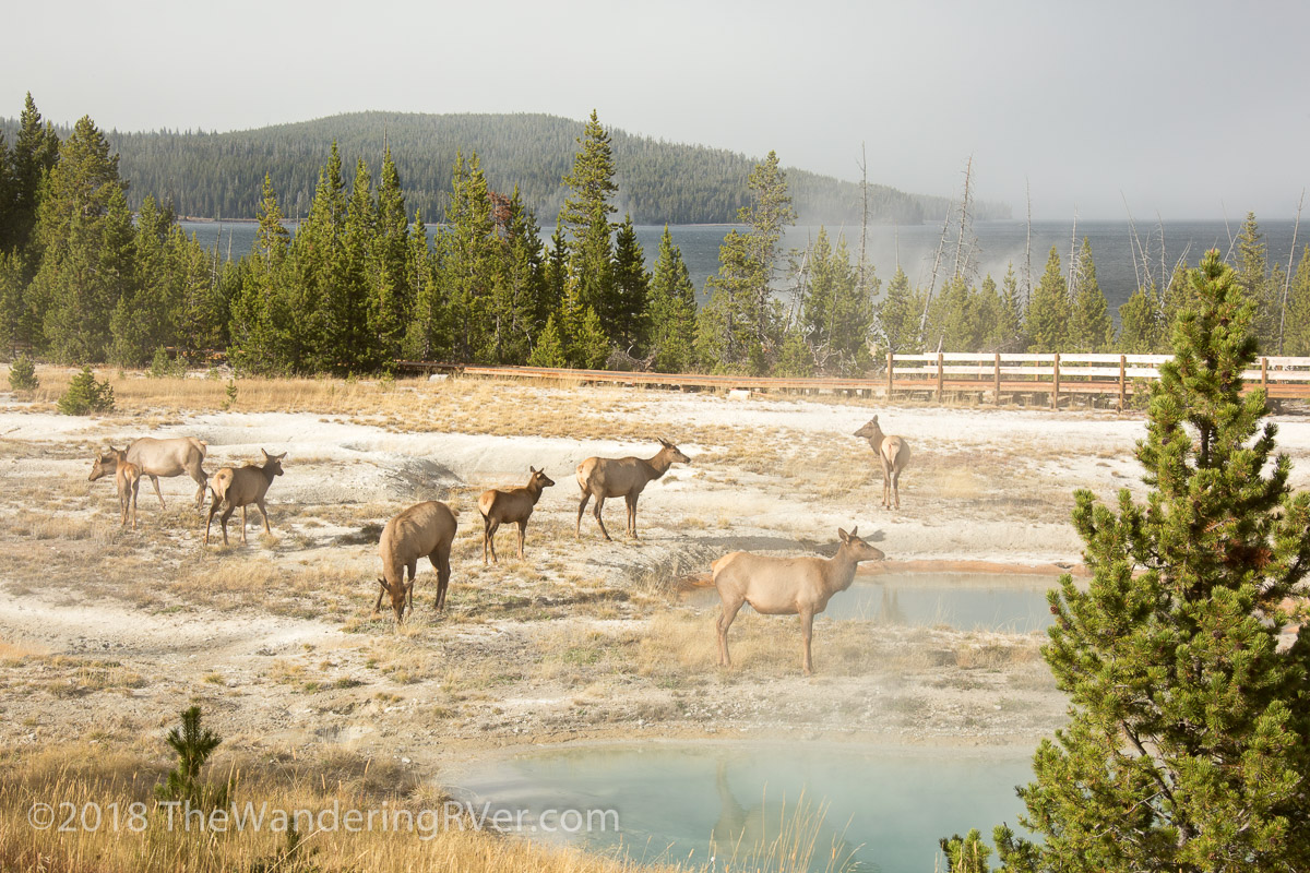 Wild About Wyoming – Yellowstone NP