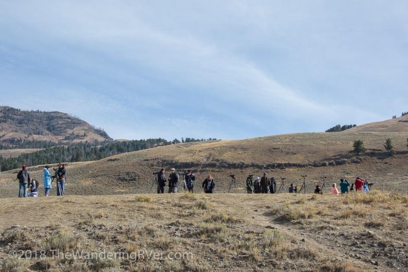 Yellowstone NP-0567